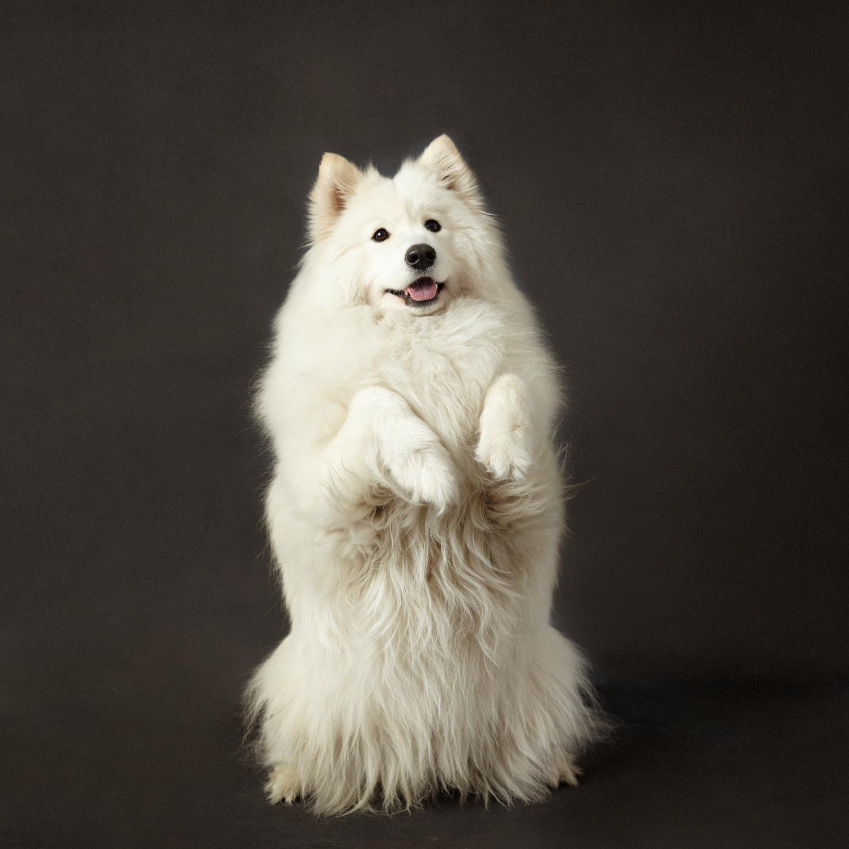 retrato de perro levantado